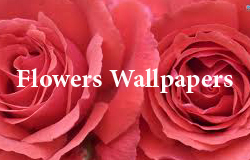! Wall Papers !